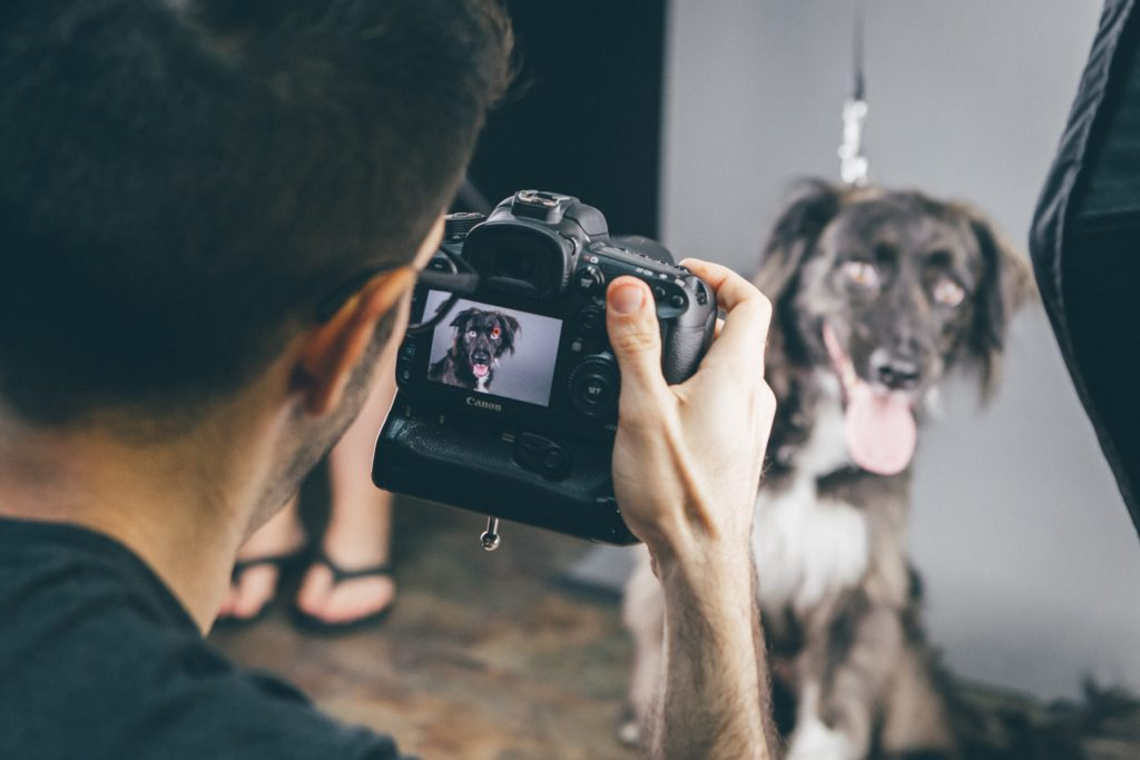 Guide To Hire The Best Pet Photographer Near You