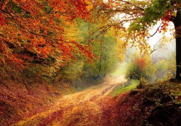 Colourful Land In Autumn Season