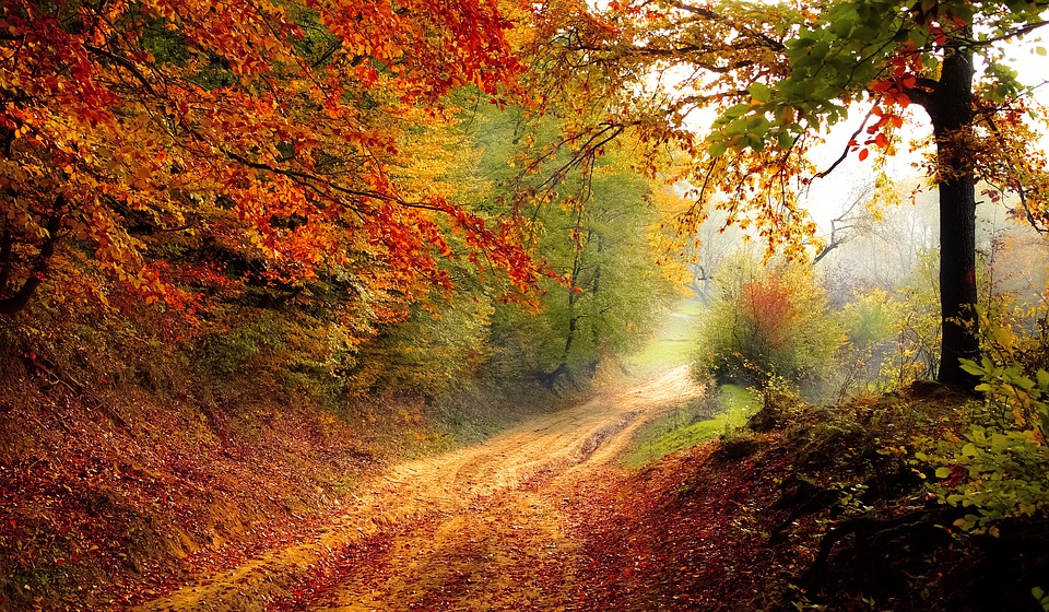 Colourful Land In Autumn Season
